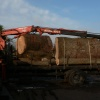 Logs arriving for sawmilling, we cut & dry our own timber