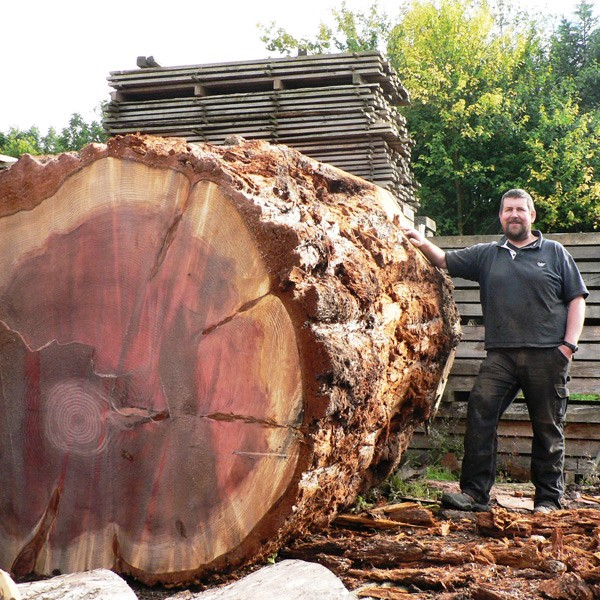 English/Native Hardwood specialists/ Huge Sequoia Log Waiting to be sawn